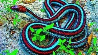 Most Beautiful & Dangerous Snakes in The World