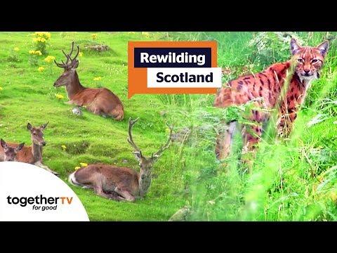 Rewilding Scotland | Full Documentary