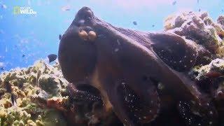 Документальный фильм Подводный мир необычные обитатели океана Морские животные монстры  NatGeo HD