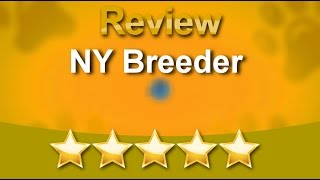 Ny Breeder White Plains Remarkable Five Star Review By Skylah L.