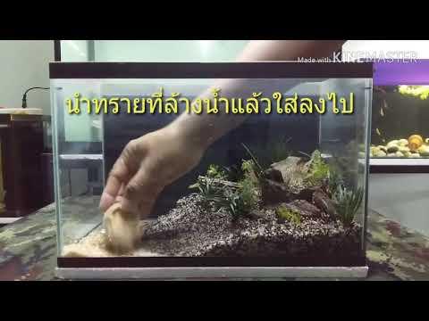 จัดตู้ปลา แบบง่ายๆ