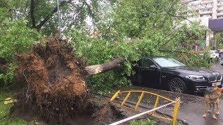 2-я часть - летний сад в Москве после урагана двадцать девятого мая 29.05.2017 деревья свалило