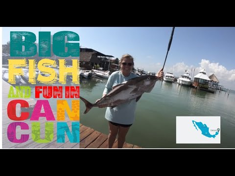 Saltwater Fishing In Cancun Mexico - Giant Amberjack