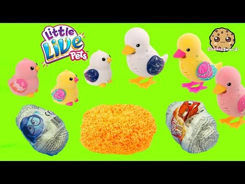 Little Live Pets Duck Mom & Baby - Unboxing 2 Chocolate Surprise Eggs + Shopkins Blind Bag
