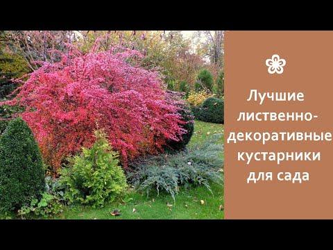 ❀ Лучшие лиственно-декоративные кустарники для сада