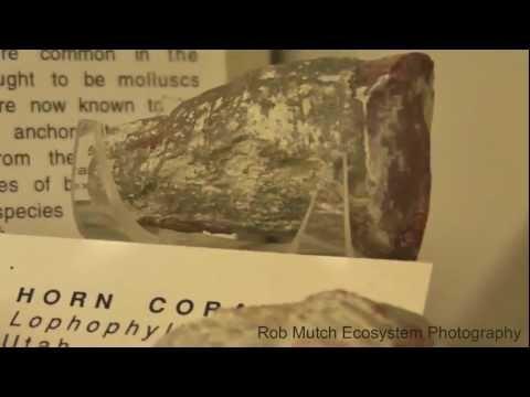 Horn Coral Fossil, Humboldt State University Marine Laboratory, Trinidad, California, USA
