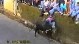 Funny Portuguese bullfight