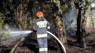 Pożar lasu w Osowej