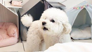 웃긴 주인과 따박따박 말대꾸 하는 귀여운 강아지 ㅋㅋㅋㅋㅋㅋ