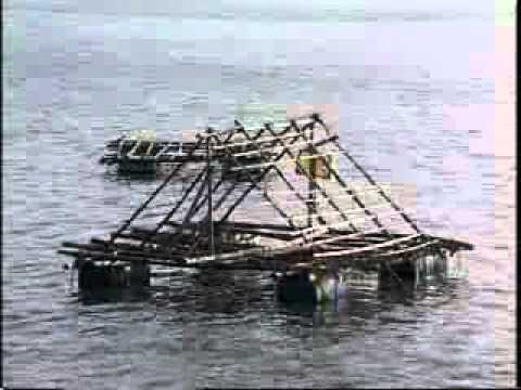 Marine Pearl Culture – India