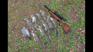 Pest Control with Air Rifles - Squirrel Shooting -  Bro Forgets His Meds!