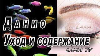 Аквариумная рыбка данио  Уход и содержание
