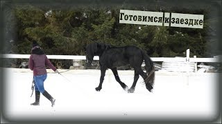 Wester Фриз. конный блог. Тренировка на корде