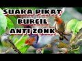 Suara Pikat Burung Kecil Anti Zonk  Mp3 - Mp4 Download