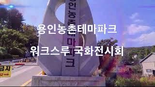 [용인희망/서소영] 용인농촌테마파크 워크스루 국화전시회