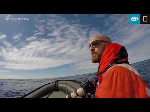Type D Orcas Filmed Under Water | Antarctica | Lindblad Expeditions-National Geographic