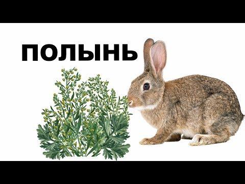 Можно ли кроликам полынь. Кролиководство