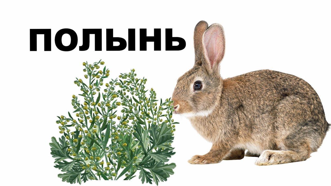 при травы нельзя давать кролику в картинках старательно дрочит ногами