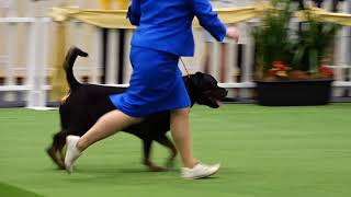 2017 Royal Adelaide Show Dog Arena   Day 5