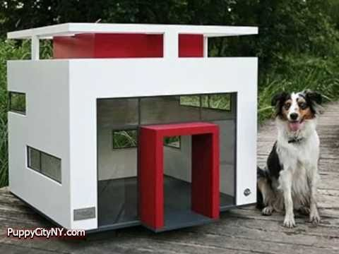 world's most expensive dog houses! - youtube