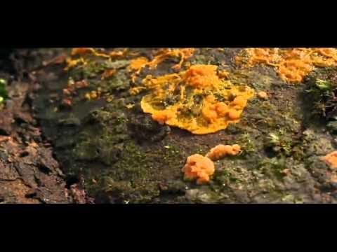 Owl City - Fireflies.mp4