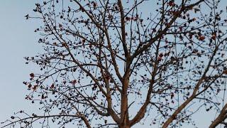 3 ताली इस पेड़ पर बजाकर देखो फिर क्या होता है खुद देख लो