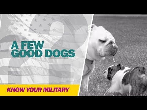 A Few Good Dogs
