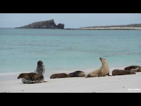 Galapagos Islands Yacht Adventure