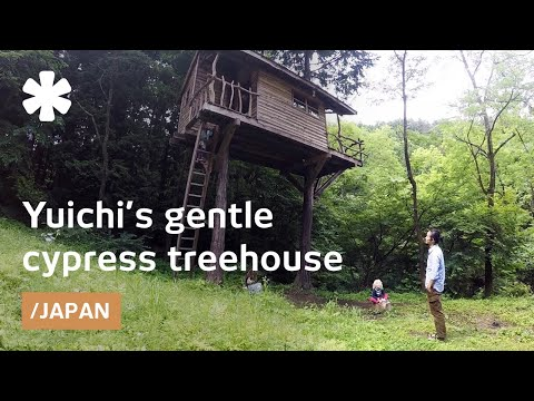 Yuichi's slim treehouse sways as a nest in Japanese cypress