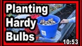 Planting Hardy Fall Bulbs - Wisconsin Garden Video Blog 735