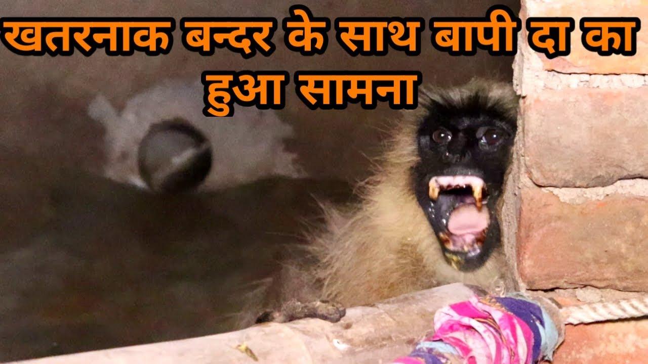 खतरनाक बंदर के साथ बापी दा का हुआ सामना #Bapi_da_snake_expert