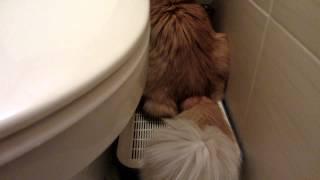Спазмы после уретростомии у кота