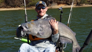 Monster Blue Catfish and Flathead in kayak on the Tennessee River- Watts Bar