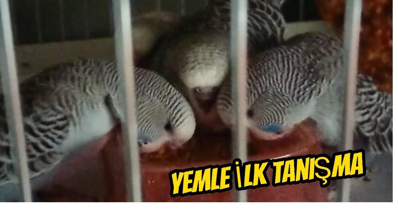 Muhabbet Kuşları Ne Zaman Yeme Düşer?