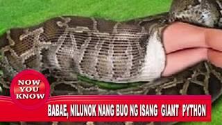 Matandang Babae, Nilunok Nang Buo Ng Giant Python