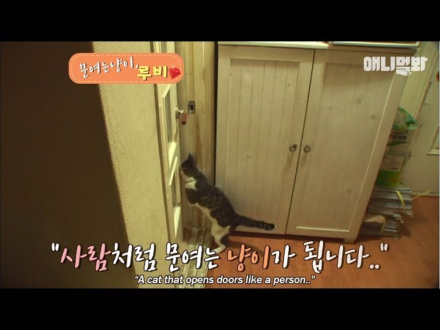 A cat that opens doors like a person..
