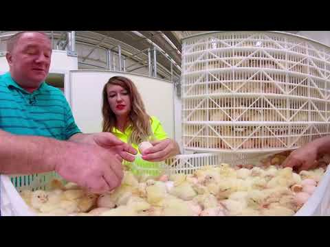 National Chicken Council Forges New Ground in Food Transparency with Launch of Immersive Virtual Reality Experience