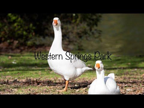 western-springs-park,-new-zealand