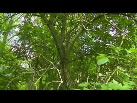 Natures Medicine - Willow + Elder