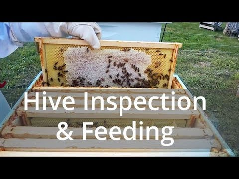 Hive Inspection and Feeding