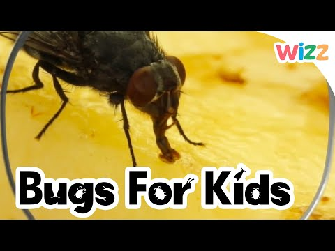 Flies For Kids