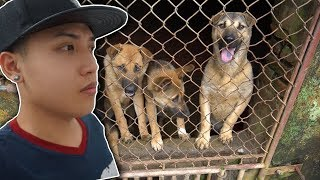NTN - Cứu Sống Những Chú Chó Khỏi Lò Mổ ( Save the dogs )