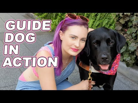 How Guide Dogs Guide A Blind Person