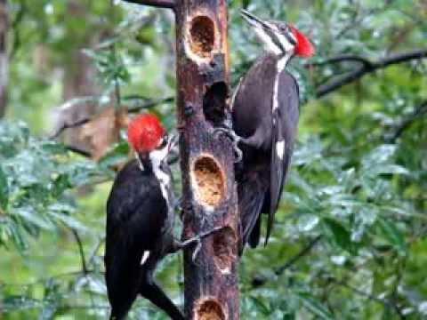 Female Woodpecker Feeding Baby From A Feeder