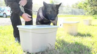 Prince Albert Police Dog Training