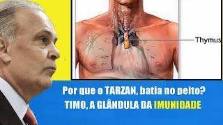 TIMO , A CHAVE PARA A IMUNIDADE . POR QUE TARZAN BATIA NO PEITO?   DR LAIR RIBEIRO
