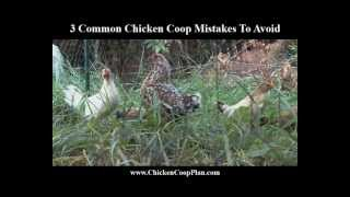 3 Common Chicken Coop Mistakes To Avoid