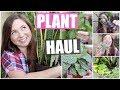 Plant Haul! Indoor, Outdoor & Air Plants | 2019