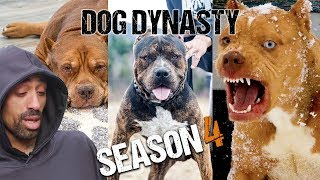 Dog Dynasty: Entire Season 4