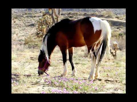 Лошади.mp4